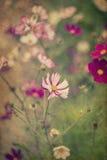 Mooi beeld van weide van wilde bloemen in de Zomer met wijnoogst Royalty-vrije Stock Afbeeldingen