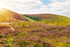 Mooi berglandschap, landschap De Bergen Nationaal Park van Wicklow, Provincie Wicklow, Ierland royalty-vrije stock foto