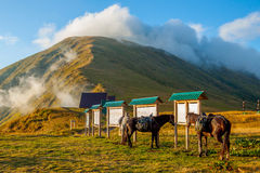 Mooi berglandschap met paarden stock afbeelding