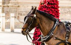 Mooi binnenlands $c-andalusisch paardportret in de stad van Sevilla Re stock foto's