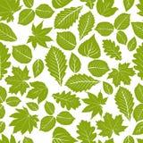 Mooi bladeren naadloos patroon, vector natuurlijke eindeloze backgr Royalty-vrije Stock Afbeelding