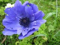 Mooi Blauw royalty-vrije stock foto