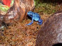 Mooi Blauw Stock Fotografie
