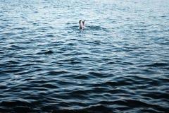 Mooi blauw water met de voeten die van een persoon uit plakken stock foto