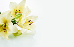 Mooi bloeit daylily met exemplaarruimte Stock Foto's