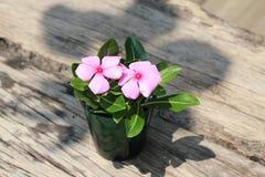 Mooi bloemboeket op houten lijst Stock Afbeeldingen