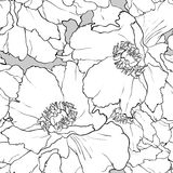 Mooi bloemen naadloos patroon Pioen vector illustratie
