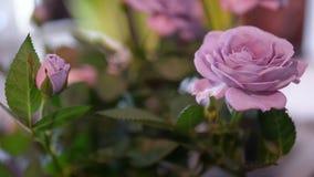 Mooi Bloemenbehang met Purpere Rozen Royalty-vrije Stock Foto
