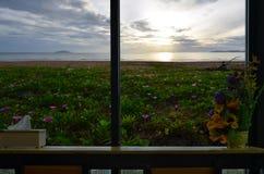 Mooi bloemgebied met ochtendstrand in toevluchtvensters royalty-vrije stock foto