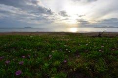 Mooi bloemgebied op het strand met ochtendlicht royalty-vrije stock foto