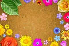 Mooi bloemkader met leeg in centrum op oranje houtvezelplaatachtergrond Bloemensamenstelling van de lente of de zomerbloemen stock afbeelding