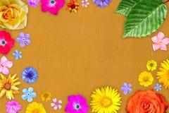 Mooi bloemkader met leeg in centrum op oranje zachte leerachtergrond Bloemensamenstelling van de lente of de zomerbloemen royalty-vrije stock fotografie