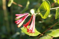Mooi boeket van bloemen voor vrouwen Stock Foto