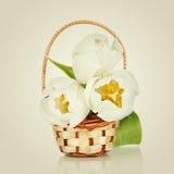 Mooi boeket van bloemen, witte tulpen Royalty-vrije Stock Fotografie