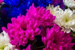 Mooi boeket van chrysanten Royalty-vrije Stock Afbeelding