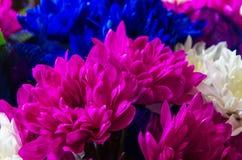 Mooi boeket van chrysanten Royalty-vrije Stock Foto