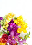 Mooi boeket van kleurrijke fresia Stock Afbeelding