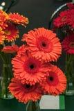 Mooi boeket van rode gerberas in een glasvaas in de bloemmarkt Royalty-vrije Stock Foto