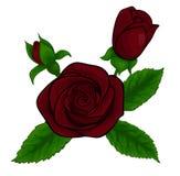 Mooi boeket van rode rozen, decoratief bloemenontwerpelement Royalty-vrije Stock Foto