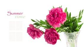 Mooi boeket van roze pioenen royalty-vrije stock foto's