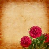 Mooi boeket van roze pioenen op abstract uitstekend document Royalty-vrije Stock Afbeelding