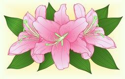 Mooi boeket van roze rozen met groene bladeren Royalty-vrije Stock Afbeelding