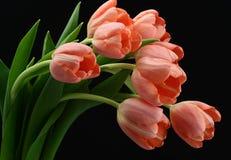 Mooi boeket van roze tulpen Stock Foto