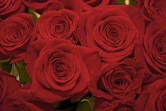 mooi boeket van sappige heldere lilac rozen Stock Afbeelding