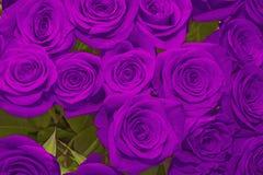 mooi boeket van sappige heldere lilac rozen Royalty-vrije Stock Afbeelding