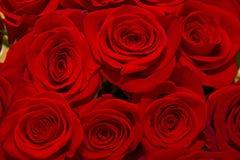 mooi boeket van sappige heldere lilac rozen Royalty-vrije Stock Foto