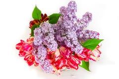 Mooi boeket van sering en tulpen op een witte achtergrond Royalty-vrije Stock Afbeeldingen
