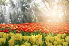 Mooi boeket van tulpen in de bloemtuin, om aard te waarderen stock foto