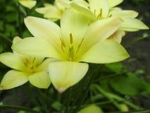 Mooi boeket van tulpen kleurrijke tulpen die op de tuin groeien Tulpen in de lentezon De achtergrond van bloemtulpen Stock Foto's