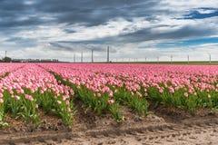 Mooi boeket van tulpen Kleurrijke tulpen tulpen in de lente s royalty-vrije stock fotografie