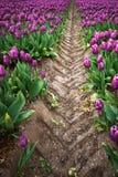 Mooi boeket van tulpen Kleurrijke tulpen tulpen in de lente s royalty-vrije stock afbeelding