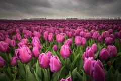 Mooi boeket van tulpen Kleurrijke tulpen tulpen in de lente s stock fotografie