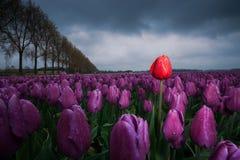Mooi boeket van tulpen Kleurrijke tulpen tulpen in de lente s stock foto