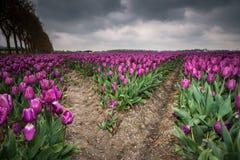 Mooi boeket van tulpen Kleurrijke tulpen tulpen in de lente s stock afbeelding