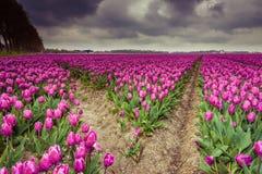 Mooi boeket van tulpen Kleurrijke tulpen tulpen in de lente s stock foto's