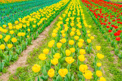 Mooi boeket van tulpen in lentetijd Stock Foto's