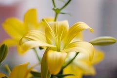 Mooi boeket van verse gele lelies De close-up van bloemen Royalty-vrije Stock Afbeelding