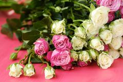 Mooi boeket van witte en roze rozen op roze achtergrond Stock Afbeelding