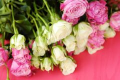 Mooi boeket van witte en roze rozen op roze achtergrond Stock Foto's