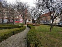 Mooi bomenn Vierkant in Polen stock afbeelding