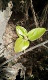 Mooi boomblad stock afbeeldingen