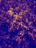 Mooi boomblad of de sierplanten van de verlofillustratie in de ruimte en de tuin royalty-vrije stock foto's