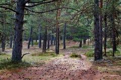 Mooi bos Stock Afbeeldingen