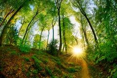 Mooi bos bij zonsondergang Stock Afbeeldingen