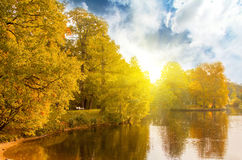 Mooi bos bij zonsopgang Stock Fotografie
