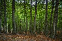Mooi bos in de bergen van noordelijk Albanië Royalty-vrije Stock Foto's